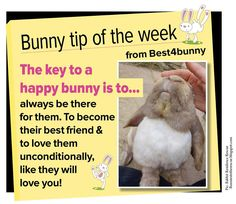 Bunny tip of the week The key to a happy bunny is. Lop Bunnies, Dwarf Bunnies, Baby Bunnies, Rabbit Life, House Rabbit, Pet Rabbit, Hunny Bunny, Cute Bunny, Rabbit Facts
