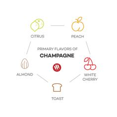 Champagne taste notes by Wine Folly