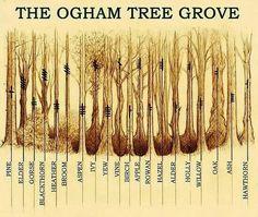 Druids Trees:  The Ogham Tree Grove.