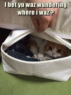 I bet yu waz wundering where i waz ? - LOLcats is the best place to find and submit funny cat memes and other silly cat materials to share with the world. We find the funny cats that make you LOL so that you don't have to. Cute Kittens, Baby Animals, Funny Animals, Cute Animals, I Love Cats, Crazy Cats, Most Famous Memes, Funny Cat Memes, Funny Humor