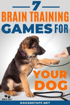 found these exercises mentally stimulating for my dogs. You should also try these simple games too! Turn your dog into a genius! care Brain-Boosting Exercises To Stimulate Your Dog's Mental Performance – Dogs N' Stuff Brain Training Games, Dog Training Tips, Training Classes, Training Videos, Training Pads, Agility Training, Dog Agility, Training Collar, Potty Training