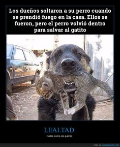 Muero de amor - Nadie como los perros Gracias a http://www.cuantarazon.com/ Si quieres leer la noticia completa visita: http://www.estoy-aburrido.com/muero-de-amor-nadie-como-los-perros/