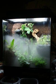 planted viv w/ DIY backround crestie build - Page 4 - Vivarium Forums Gecko Terrarium, Reptile Terrarium, Reptiles, Lizards, Snakes, Reptile Cage, Reptile Enclosure, Crested Gecko Vivarium, Reptile Crafts