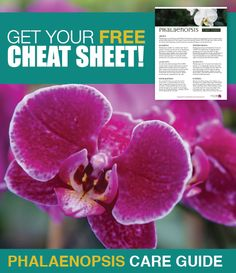 FREE cheat sheet about caring for your #phalaenopsis orchids. It covers crucial care tips about watering, fertilizing, and more!