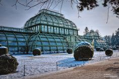 The Palm House. Dutch Gardens, Architectural Engineering, Types Of Architecture, Vienna Austria, British Isles, All Over The World, Cool Places To Visit, Frost, The Good Place