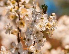 Spring blossom by AndreyGlushenko #nature #mothernature #travel #traveling #vacation #visiting #trip #holiday #tourism #tourist #photooftheday #amazing #picoftheday