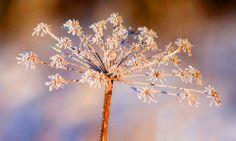 """Visa bild - """"Vinterskrud"""" - Fotosidan"""