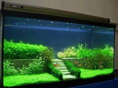 beautiful tank with what I hope are live plants