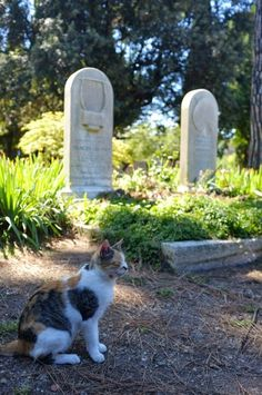 Cat at the gravesite of poet John Keats at the Protestant Cemetery in Rome, Italy. See more: http://www.traveling-cats.com/2014/08/cat-from-rome-italy.html