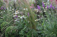 hagen vår: Purpursolhatt og prydgress er en vakker kombinasjon