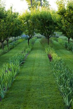 Underplanting fruit trees in rows - Orchard Chateau Plaisir. A stunning country Chateau garden in the south of France. Iris Garden, Garden Paths, Garden Landscaping, Formal Gardens, Outdoor Gardens, Landscape Architecture, Landscape Design, Orchard Design, Parc Floral