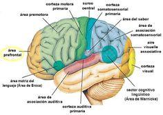 níveis neurológicos da aprendizagem - Google Search