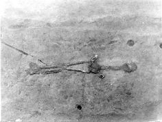 Giant Nephilim Skeletons Removed from Huntington, West ...