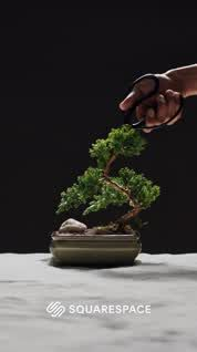 Bonsai is generally a tree or plant that has actually been kept smaller sized than its typical size. The technique to making a bonsai plant is to frequently prune the tree every spring Bonsai Fruit Tree, Bonsai Tree Care, Bonsai Tree Types, Bonsai Plants, Bonsai Garden, Succulents Garden, Fruit Trees, Garden Plants, Indoor Plants