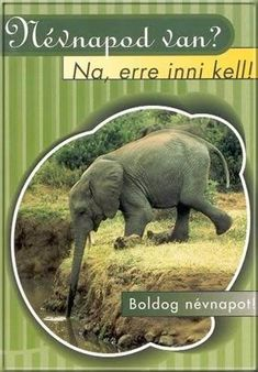 Na erre inni kell! Vicces névnapi képeslap. Happy Name Day, Happy Day, Today Is My Birthday, Happy Birthday, Idioms, Creative Gifts, Holidays And Events, Elephant, About Me Blog