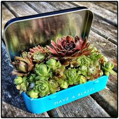 Mini Garden in a Tin Box OK, this it too cute! Use one of our metal boxes and make a truly unique display!