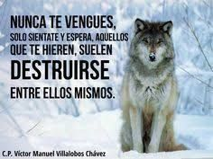 82 Mejores Imagenes De Lobo Solitario Lone Wolf Wild