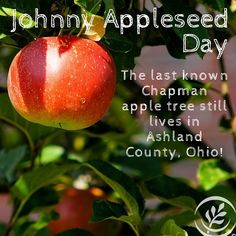 Planting food lasts more than a lifetime. Lets return to the happier days of Johnny Appleseed when it comes to feeling about how food is grown.