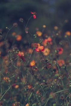"kataklysmic: "" summer lovin' … happened so fast "" Nature Aesthetic, Flower Aesthetic, Aesthetic Photo, Cute Backgrounds, Wallpaper Backgrounds, Wild Flowers, Beautiful Flowers, Flower Wallpaper, Nature Pictures"