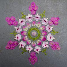 Kathy Klein-nature and art Flower Rangoli, Flower Mandala, Mandala Art, Mandala Wallpaper, Floating Flowers, Nature Artists, Pressed Flower Art, Rangoli Designs, Resin Crafts