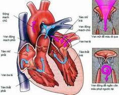 Hở van tim có nên mang thai không còn phụ thuộc vào thể bệnh bạn gái bạn mắc và mức độ tiến triển của bệnh.