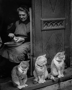 Some pictures just make your smile #blackandwhitephotography #catsofinstagram #1940s #vintagestyle #vintagephotography #beauty #england #oldphoto