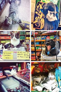 33. Because we have the cutest security guards. Photo: Tamara Porres (cat on floor); Erin Lee Car (cat on register); Dayvid Lemmon (cat with bananas); Chloe Apple Seldman (cat yawning); Gisele Dupre (cat with chips); Patricia González-Ramírez (cat on freezer)