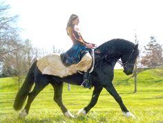 Pleasantstone Welsh Cobs & Sport Ponies