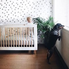 767 Best Black And White Nursery Images In 2019 Baby