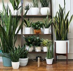 Today we met our plant friend in Paris 💚. At home in Toronto he has the coolest collection of Sansevieria: did you know… Decor, Home And Garden, House, Interior, House Plants Indoor, Plant Decor Indoor, Green Plants, Plant Decor, Plant Life
