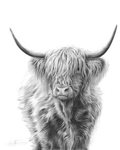 highland cow line drawing - Google Search