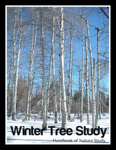 Looking for simple family oriented winter activities to do with your children? These challenges are simple weekly nature study ideas to use during. Nature Activities, Winter Activities, Science Nature, Winter Plants, Winter Trees, Study Inspiration, Study Ideas, Tree Study, Challenges To Do