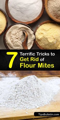 Find out how to eliminate flour mites throughout their life cycle, from eggs and larvae to adults. Store dry foods in airtight containers to prevent mites from reaching their food source. Plus, clean your pantry with bleach, spray a repellent, and vacuum in crevices. #flour #mites #getrid Insect Eggs, Expired Food, Dried Vegetables, Corn Chips, Food Containers, Clean Recipes, No Cook Meals, Food Grade, Food Storage