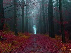 Шварцвальд, Германия