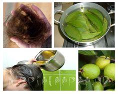 Δείτε πώς μπορείτε να τονώσετε την ανάπτυξη των μαλλιών σας αλλά και να σταματήσετε 100% την τριχόπρωση με φύλλα γκουάβα!