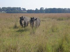 Rhinos @ emerald casino & game resort