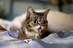 Now BUB is trying to make lollypops appear everywhere. Your powers are not a toy BUB.