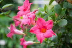Exotic pink by TalyaPhoto on @creativemarket