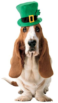 Happy St.Patrick's Day!  I love a dog that parties