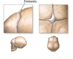 O esqueleto humano - Só Biologia