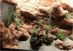 Wüstenterrarium mit Felslandschaft, Höhle und Tillandsien Bepflanzung