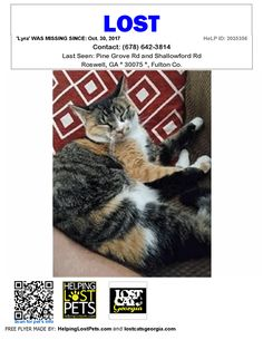 Lost Cat - Roswell GA - Oct.30 2017 Closest Intersection: Pine Grove Rd and Shallowford Rd County: Fulton  #LOSTCAT #Lyra #Roswell (Pine Grove Rd & Shallowford Rd)  #GA 30075 #Fulton Co.  #Cat 10-30-2017! Female #Domestic Short Hair Black / Orange / White/Lost indoor/outdoor cat. Hopefully just spooked somewhere off shallowford rd in Roswell. Her name is Lyra. Sweet cat but generally skittish. Best to call with location rather than try and pick her up. Please call 678-642-3814 if you've seen…