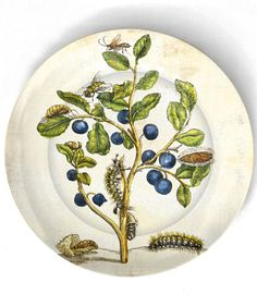 Blueberries -1600's botanical artwork - reproduced on 10 inch Melamine Plate by The Mad Platters
