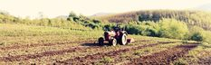 Sfaturi pentru înființarea unei plantații de arbuști fructiferi Country Roads, Farm Gate, Plant