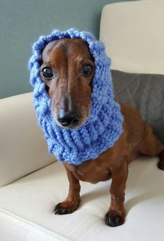 Keep your furry friend warm and cozy in this fun snood! Perfect for those chilly fall and winter walks. Handmade with chunky yarn in Periwinkle. Made for a small dog. Model is a Miniature Dachshund weighing approx. 12.5lbs. Snood is stretchy and could fit a slightly larger breed.