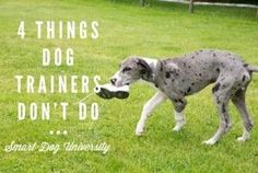 dog trainer, dog training, dog obedience, puppy, puppy training, puppy classes, Frederick, clicker, Smart Dog,:
