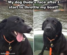 Fun On The Boat // tags: funny pictures - funny photos - funny images - funny pics - funny quotes - #lol #humor #funnypictures