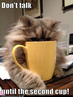 it is safe to talk to me nao. i has had mai coffee. - LOLcats is the best place to find and submit funny cat memes and other silly cat materials to share with the world. We find the funny cats that make you LOL so that you don't have to. Funny Cats, Funny Animals, Cute Animals, Funny Humor, Hilarious Quotes, Jokes Quotes, I Love Coffee, My Coffee, Coffee Cat