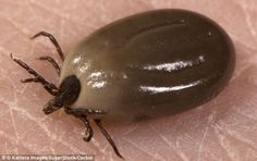 A mother-of-three who spent two years being treated for multiple sclerosis has been cured with a simple course of antibiotics – after it was revealed that her symptoms were actually caused by a tick bite.