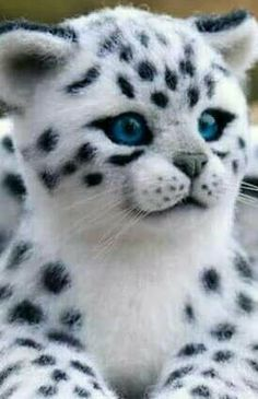 exotic animals you can keep as pets 11 pictures 9 Cute Wild Animals, Baby Animals Pictures, Cute Little Animals, Cute Animal Pictures, Majestic Animals, Rare Animals, Funny Animals, Exotic Animals, Cute Cats And Kittens